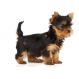 Royal Canin Yorkshire Terrier Junior crocchette per cuccioli di Yorkshire