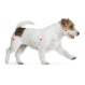 Royal Canin Jack Russell Adult crocchette per cani Jack Russell